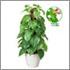 光触媒人工観葉植物、フレッシュポールポトス(48cm)