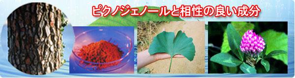 ピクノジェノールと相性の良い成分、イチョウ葉エキスおよびレッドクローバーについて説明します。